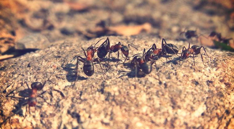 ¡Ayuda!.. Invasión De Hormigas